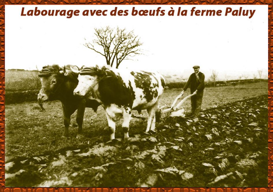 Agriculture labour jpeg 1